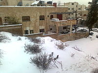 امطار و ثلوج الاردن  _online